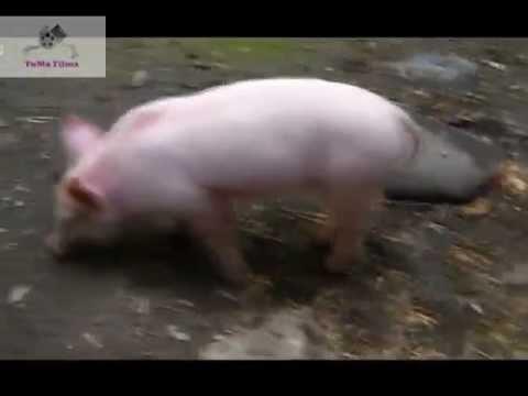 Videos divertidos de animales