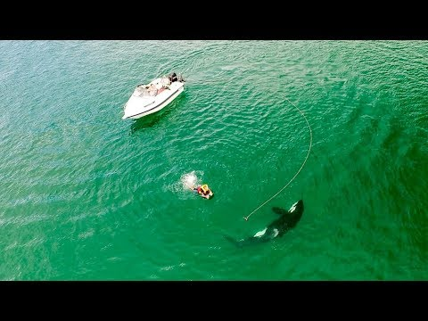 Inquisitive Orca Interacts With & Blows Bubble At Kneeboarder