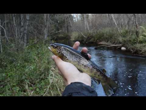 ловим на лесных реках
