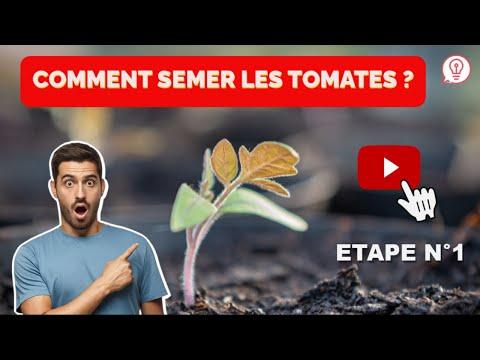 Comment semer les tomates youtube - Comment recuperer des graines de tomates ...
