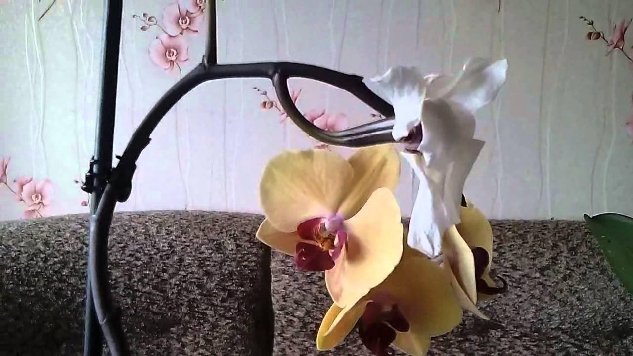 Как правильно опылять орхидею в домашних условиях