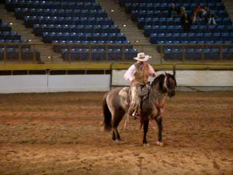 Thunder, a kiger mustang, at the Rocky Mountain Horse Expo 2010 Video