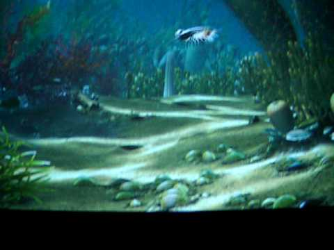 Burgess Shale Animation