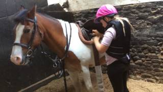 How to tack up a horse X