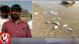 Mass Fish Death In Koil Sagar Project Due To Lack Of Water | Mahabubnagar