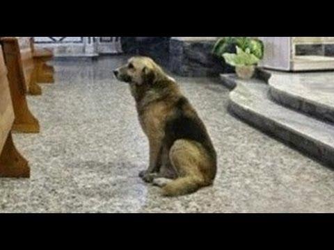 PERRO BUSCA A DIARIO A SU DUEÑA FALLECIDA. Los sentimientos y lealtad de los perros