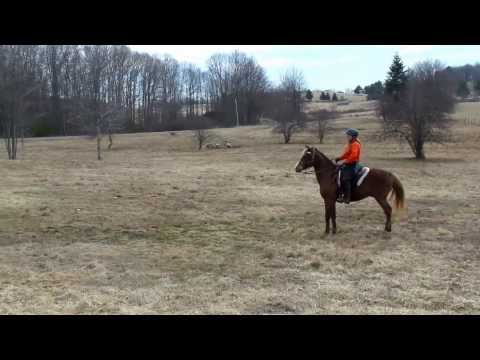 Spooked Horse Over White Donkey video
