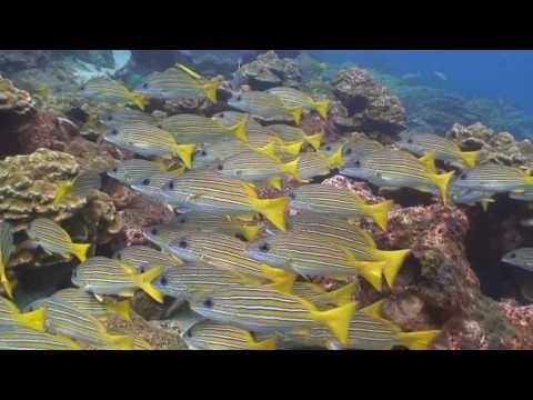 scuba-diving-cocos-island-3.html