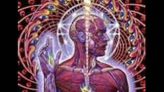 Watch Tool The Gaping Lotus Experience video