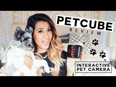 Petcube Review + GIVEAWAY! Interactive Pet Camera   Ariel Hamilton