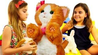 Evcil hayvanlar oyunları - Pelüş oyuncakları