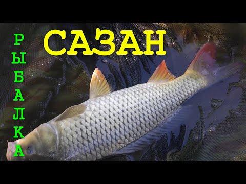 моя рыбалка бесплатный просмотр