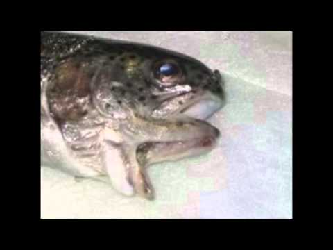 The minamata disease truth youtube for Why do fish have mercury
