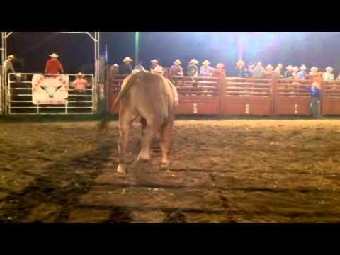 2014 Elgin Invitational Freestyle Bullfight video