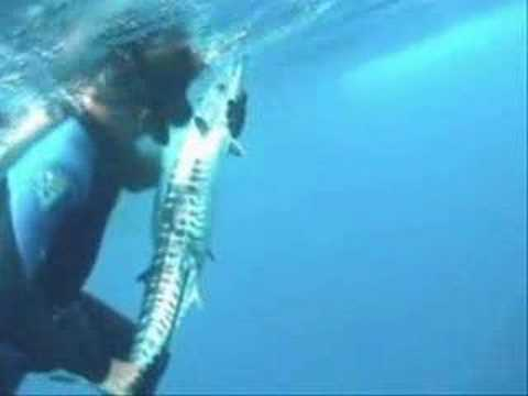 Spearfishing Puerto Rico Freedivers