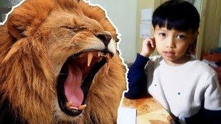 Bé học tiếng anh động vật: Dạy bé lớp 1 đọc tên con SƯ TỬ bằng tiếng anh bài 52