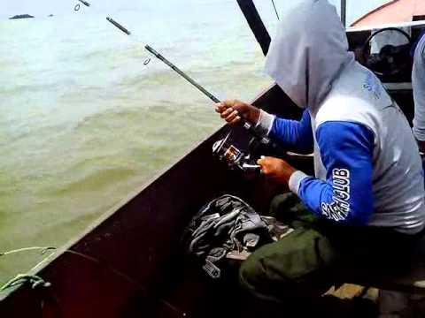 Memancing ikan kakap tompel besar pakai teknik dasaran dengan...