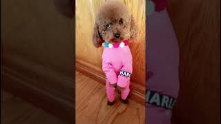 Look at these cute and funny puppies dogs 1696