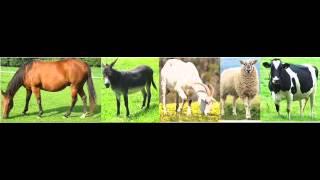 Apprendre les noms des animaux en Arabe: Première Partie