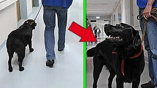 НE WANTED TO RETURN THE DOG TO THE SHELTER, BUT REGRETTED WHEN HE FOUND OUT WHO ITS OWNER WAS