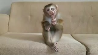 Monkey Baby Nui | Nui's great moment