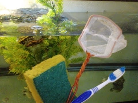 Top Tips on How To Keep Your Turtle Tank Clean and Algae Free!