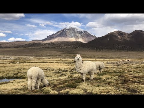 Bolivien - Sajama Nationalpark