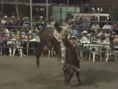 15 toros malditos de rancho los destructores en tenextepango morelos