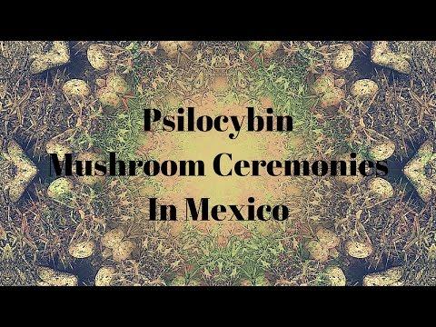 Psilocybin Mushroom Cermonies In Mexico w/ Oliver Quintanilla