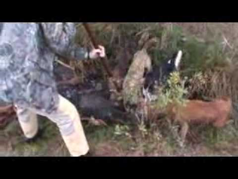 Florida Wild Hog Hunt with Spears