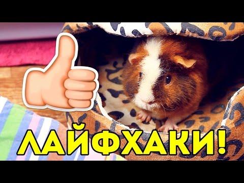 ЛАЙФХАКИ для Владельцев Морских Свинок / SvinkiShow