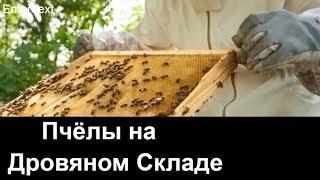 пчеловодство для начинающих -№59 Пчёлы на Дровяном Складе.Обмен Опытом.Пчеловодство.