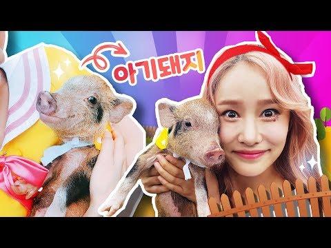 돼지농장에서 일하기!!  tv유치원 바쁘다바빠 직업체험 - 지니