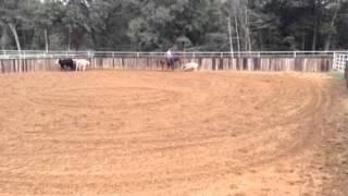 Lane- Jared Lesh cowhorses