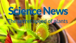The secret speed of plants | Science News