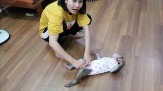Monkey Baby Nui | Great girl nui