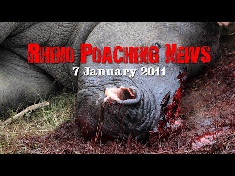SOUTH AFRICAN RHINO POACHING NEWS - EXCLUSIVE HD FOOTAGE