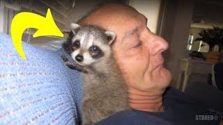 Hombre salvó un mapache enfermo, pero un año después él no estaba preparado para lo que pasaría.