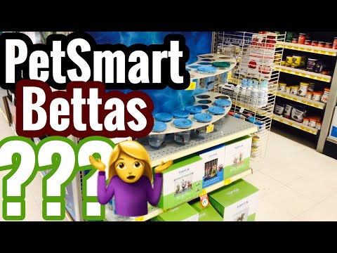 PetSmart Betta Fish Reviews? Abuse or Died on You?