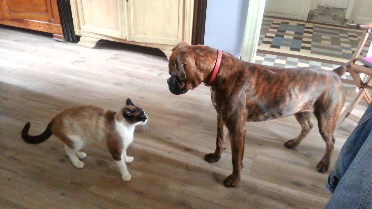 Chien et chat bagarre la vie la mort youtube - Com chien et chat ...