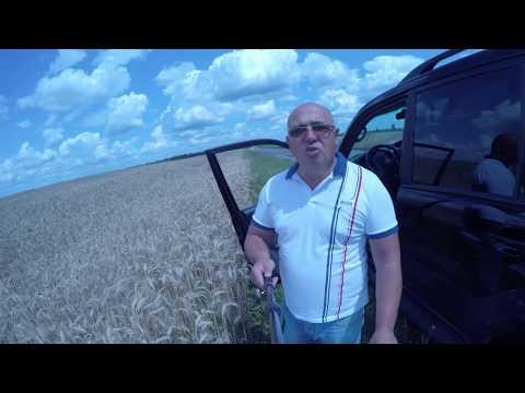 Гумат калия на пшенице
