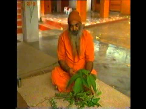 Marvels Of Himalayan Herbs