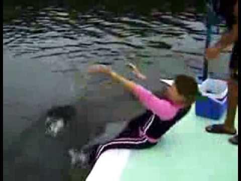 Yunus balığı kadını taciz ediyor