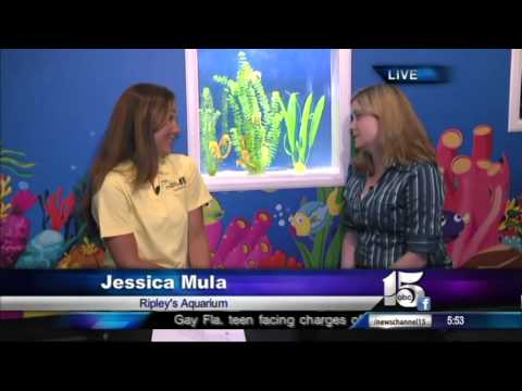 5/22/13 Amanda Live at Ripley's Aquarium - Good Morning Carolinas