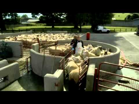 BIMEDA-SHEEP-DIPPING-200411.wmv