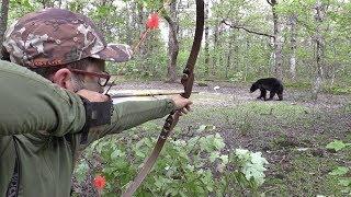 CLOSE RANGE DIY bear hunt with traditional archery gear over waterhole!