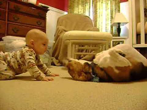Tierno primer encuentro de un Beagle con un bebé