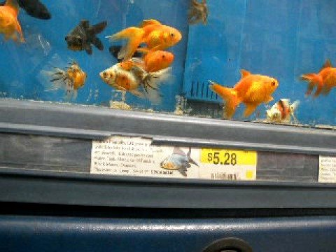 walmart fish tank youtube