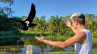 My PET SWAN Escaped the POND!! (what happened)