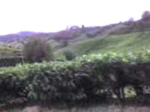 Ladang Teh - Gunung Brinchang Video